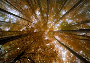 Рогачева гора