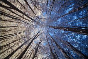Балканско зимно