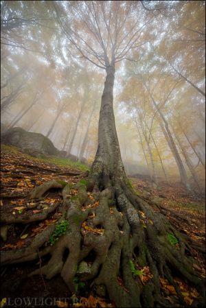 Балканска есен II