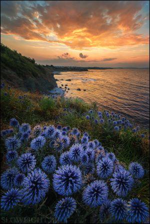 Най-красивите от грозните цветя